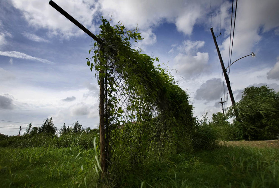 Fence : Witness: Katrina : SUSAN MAY TELL: Photographs of Space, Silence & Solitude